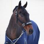 Недоуздок MIU Equestrian